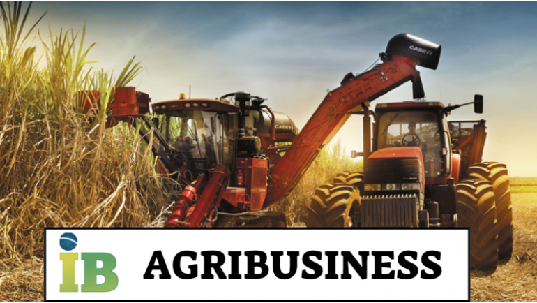 Agribusiness Brasile: Aumento Produzione Zucchero di Canna